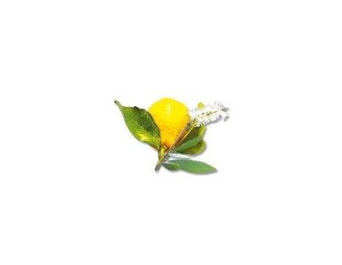 Velours de Spa - Kajeput & citron - balení 250 ml